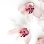 Orchidea kihívás