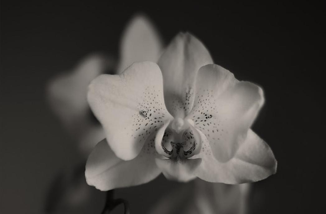 Orchidea gondozás PLC-vel? Folytatás következik