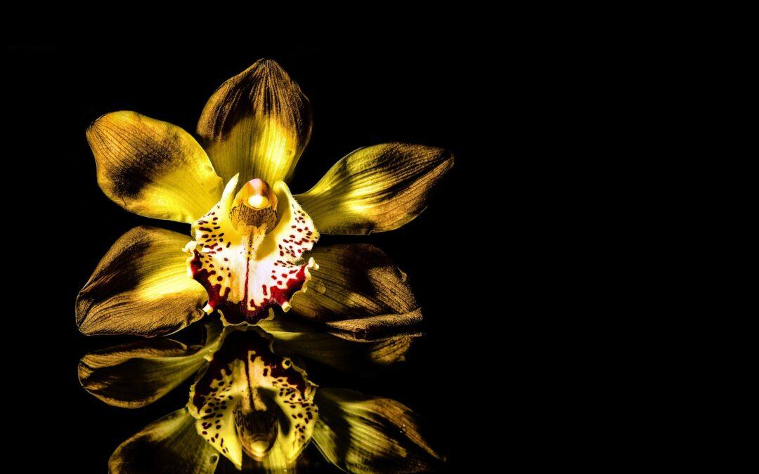 Orchidea gondozás PLC segítségével –  3. rész